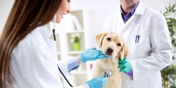 Curso de Auxiliar Veterinário e Pet Shop Online Grátis